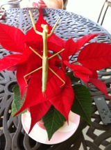 This mantis came for lunch one day, enjoying our poinsettia as we dined on the patio. It may or may not be the same one that has been hanging around for the past 8-10 weeks...no idea of their lifespan.